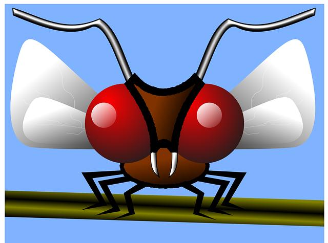 ブヨに似ている虫です。