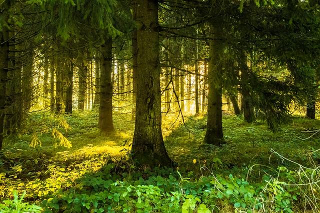カブトムシの幼虫が居そうな森