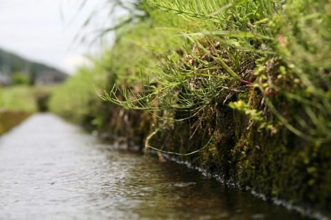 夏の用水路