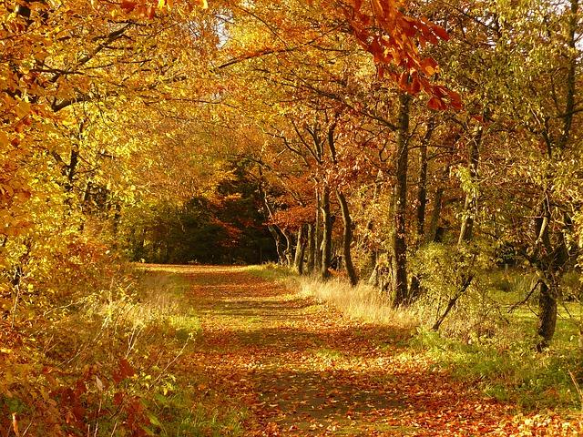 秋といえば紅葉です。