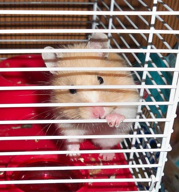 hamster-13755_640
