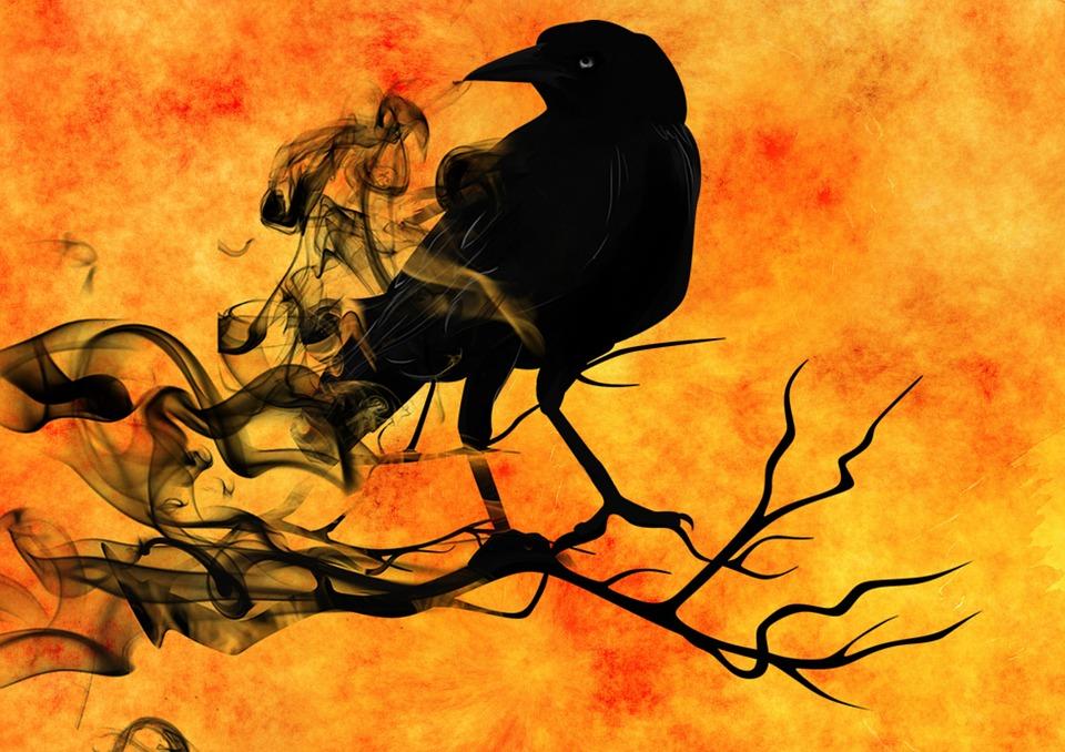 raven-988229_960_720