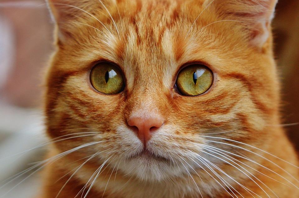 cat-1044787_960_720