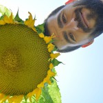 sunflower-755272_960_720