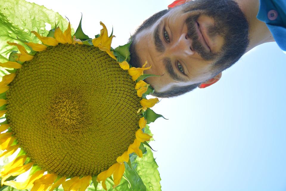 sunflower-755272_960_720