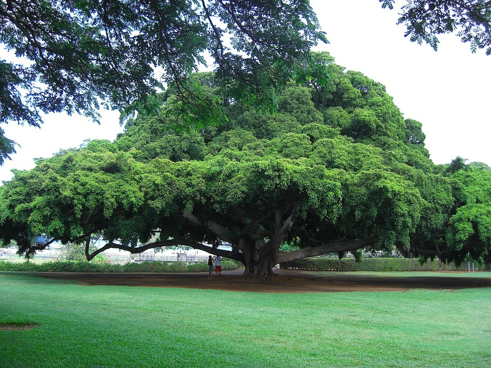 tree-18480_960_720
