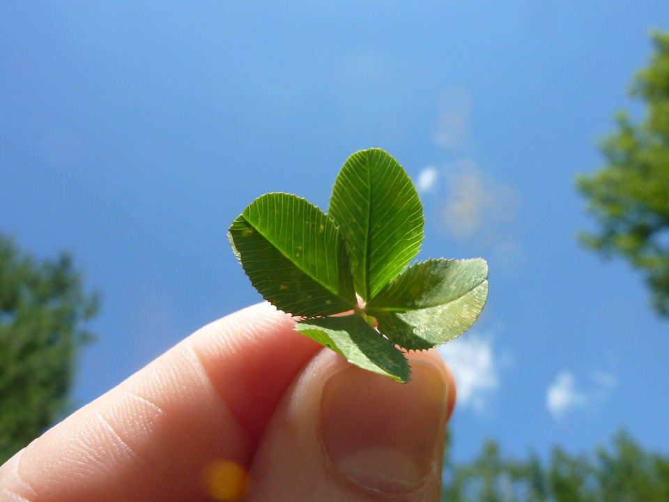 four-leaf-clover-19776_960_720