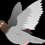 squab-151212_960_720
